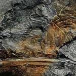 KB_BO_Fossielen_Fossielen_2